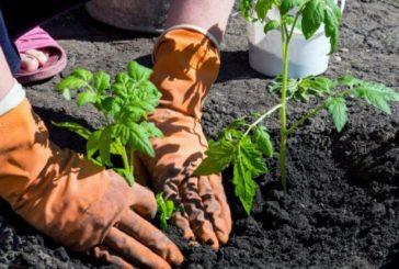 Восени готуємо ґрунт для розсади