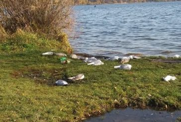 Імовірною причиною масової загибелі птахів на березі Тернопільського ставу стало отруєння