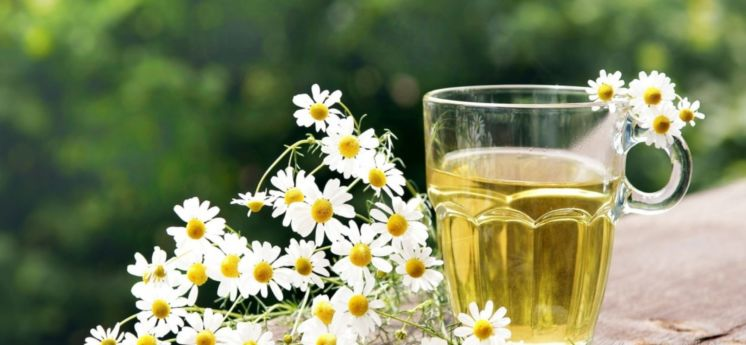 Пийте відвар з хвої та ромашки і хронічна втома відступить