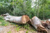 На Бережанщині під час заготівлі дров загинув чоловік