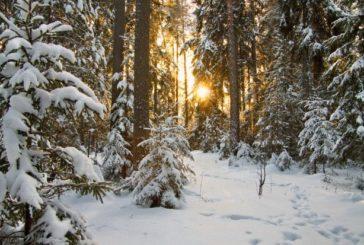 В Україні очікується найтепліша зима за 30 років. Але й арктичні морози не оминуть