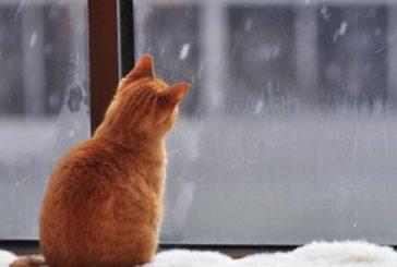 В Австралії котам заборонять виходити з дому