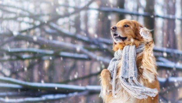 До України підкрадається справжній зимовий холод