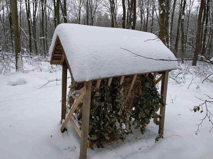 Годівниці Буданівського лісництва користуються попитом серед мешканців лісу (ФОТО)