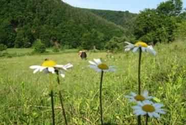 Тернопільщина – у топ-5 найбільш екологічно чистих регіонів України