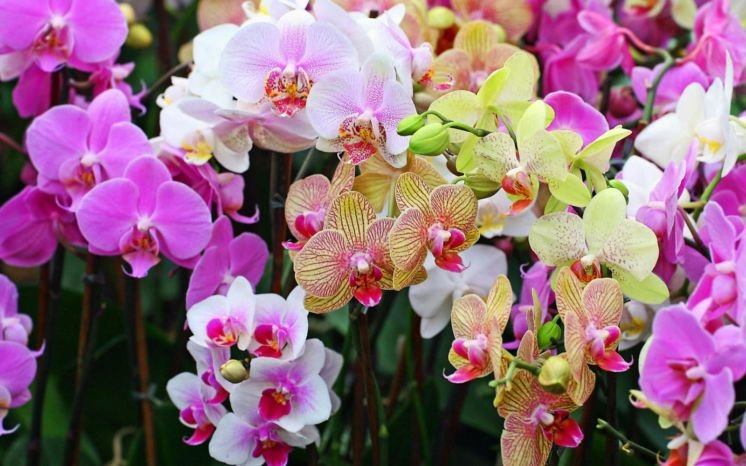 На Мадагаскарі знайшли орхідеї з ароматом шампанського