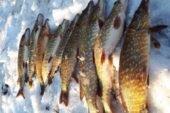 На Тернопільщині за тиждень у браконьєрів вилучили 59 кг риби