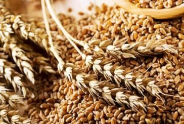 Скільки зернових має Тернопільщина?