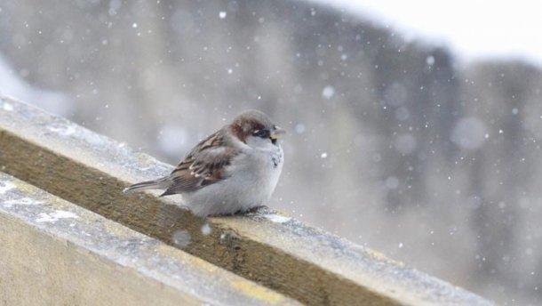 Вівторок на Тернопільщині – снігово-дощовий