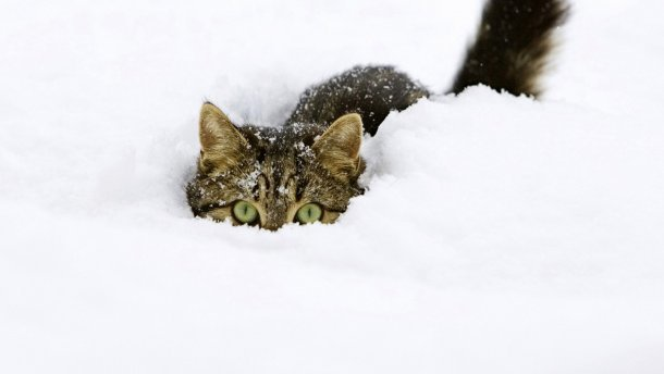 У п'ятницю на Тернопільщині буде морозно і сніжитиме