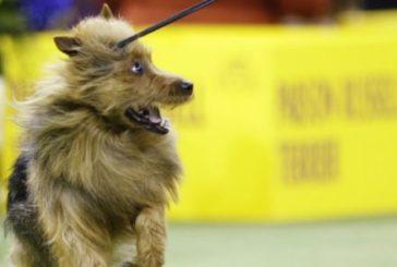 У французькому місті заборонили собакам гавкати