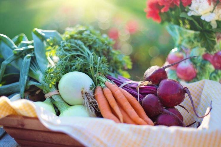 Насіння овочів і квітів тепер можна купити онлайн в місцевому магазині Matla Flowers