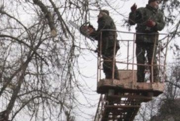 У тернопільських парках здійснюють санітарну обрізку дерев