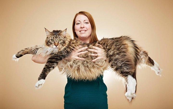 Можете уявити майже півтораметрового кота?