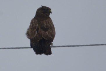 Які птахи зимували в природному заповіднику «Медобори» на Тернопільщині? (ФОТО)