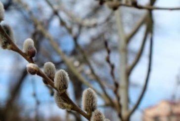 Повертається весняне тепло і сонце