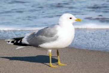 Хто потруїв птахів біля Тернопільського ставу?
