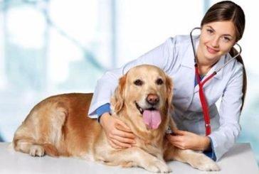 Собаки можуть діагностувати хвороби