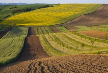 На Тернопільщині місцеві скарбниці отримали 49,1 млн грн плати за землю