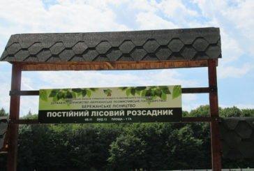 Лісівники Тернопільщини висадять 3,5 мільйонів дерев (ФОТО)