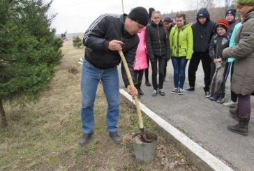 Юні лісівники Калагарівки, що на Гусятинщині, створили алею випускників (ФОТО)