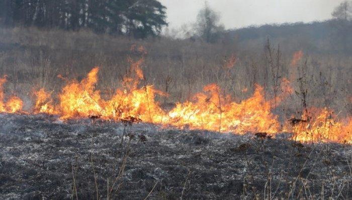 В екосистемах Тернопільщини виникло 1411 пожеж