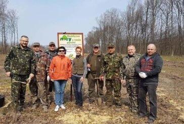 Лісівники та екоінспектори посадили 7 тисяч дубків у Микулинецькому лісництві (ФОТО)