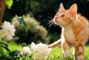 Сьогодні – Теплого Василя: сонце починає яскраво гріти