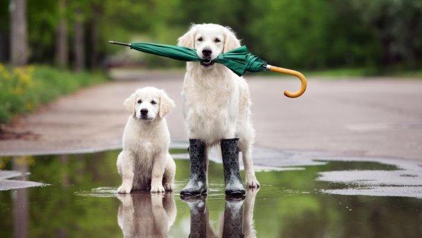 На Тернопільщині в четвер буде прохолодно і мокро