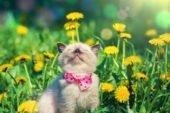 Передвеликодня п'ятниця буде з теплом, сонцем і дощем