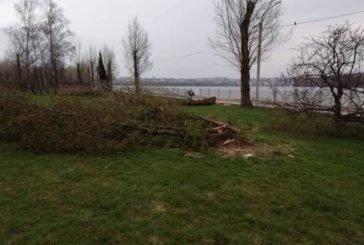 Хто зрізав дерева у тернопільському парку ім. Т. Шевченка?