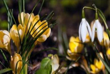Прогноз погоди на 19 квітня: весна повертається, але подекуди обіцяють заморозки