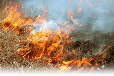 У Ланівцях через підпал сухої трави могло згоріти 3 гектари пшениці