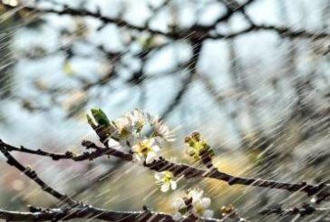 У вівторок на Тернопільщині – холодно, дощ зі снігом