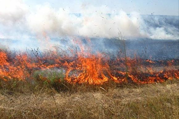 На Кременеччині вночі хтось підпалив суху траву: ледь не згоріло 5 гектарів лісу