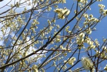 У середу – квітнева прохолода