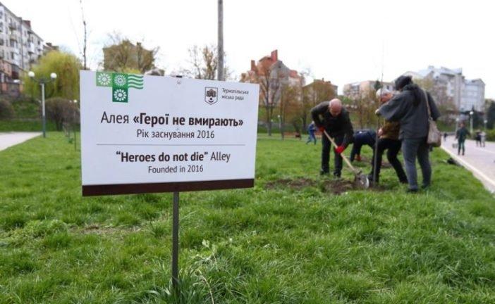 У Тернополі, на алеї «Герої не вмирають», висадили тюльпанові дерева (ФОТО)