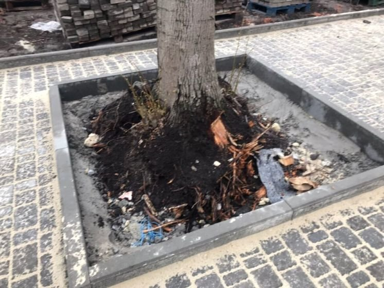 У Тернополі нахабно вирізають дерева: на вул. Текстильній, 22 замість зеленої зони – 56 пнів (ФОТО)
