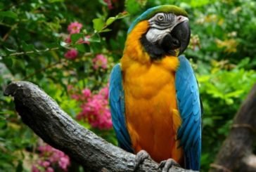 У Бразилії поліція заарештувала папугу-«наркоторгівця»