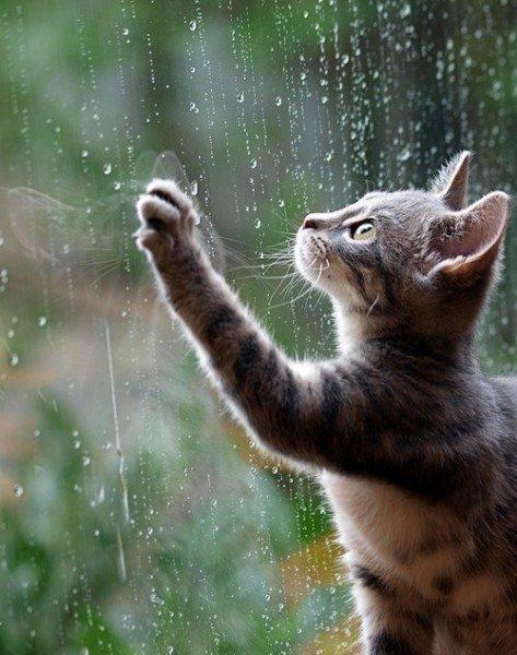 Дощі з Тернопільщини не відступлять