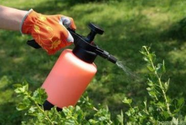 На городі допоможе борна кислота