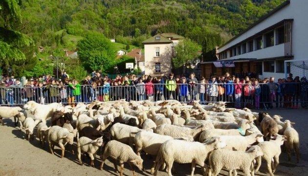 У Франції в школу зарахували 15 баранів