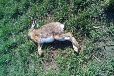 На Тернопільщині за загибель мисливських тварин будуть відповідати аграрії