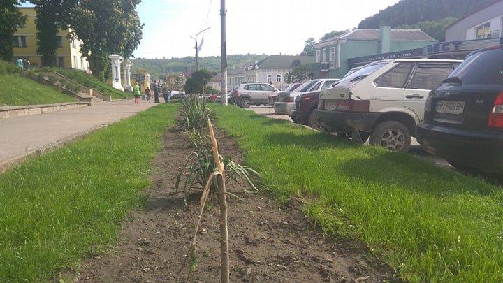 У центрі Кременця вандали знищили зелені насадження (ФОТО)