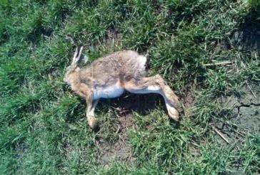 За загибель мисливських тварин у Тернопільському районі аграрії будуть відповідити