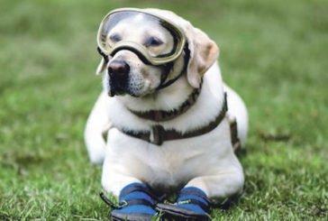 Знаменита собака-рятувальниця пішла на пенсію
