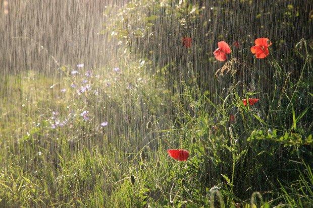 На Тернопільщині сьогодні ймовірний дощ з грозою