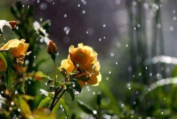 Не забудьте парасольки: сьогодні на Тернопільщині обіцяють дощі і грози