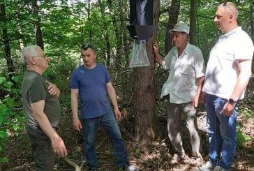 У Бучацькому лісгоспі встановлюють феромонні пастки для боротьби з шкідниками (ФОТО)