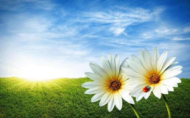 Сьогодні сонце повертає на зиму, а літо – на спеку